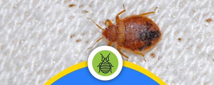 Bed Bug Control Bonner