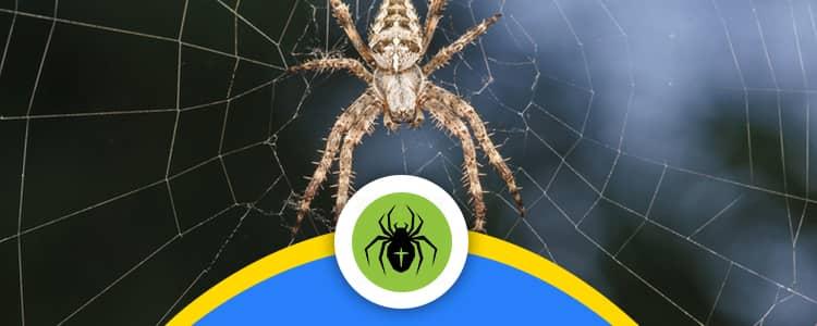 Spider Control Bonner