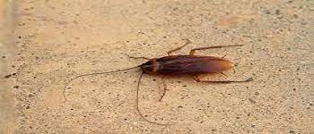 Cockroach Control Bonner