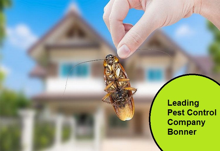 Leading Pest Control Company Bonner