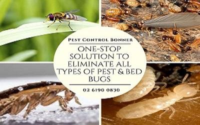 Pest & Bed Bugs Treatment Bonner
